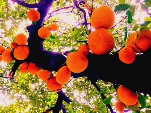 Halloween grapefruit